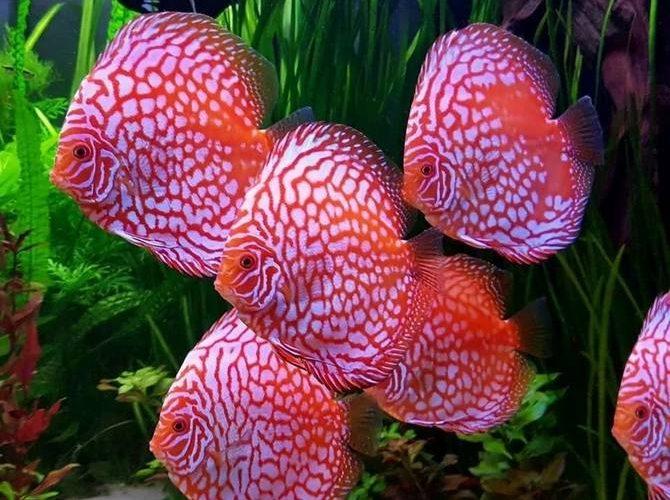 описание, виды, содержание и уход в аквариуме