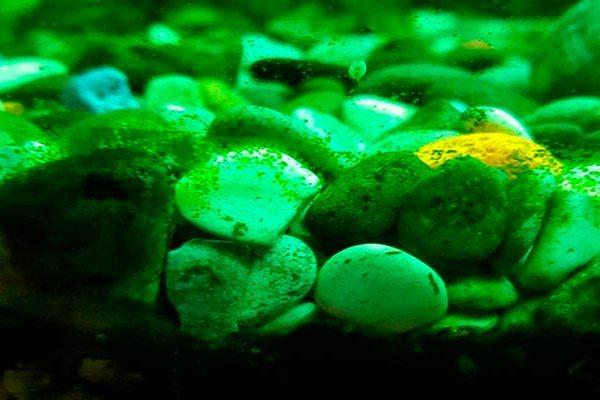 рыбки которые чистят от грязи, лучшие санитары, фото