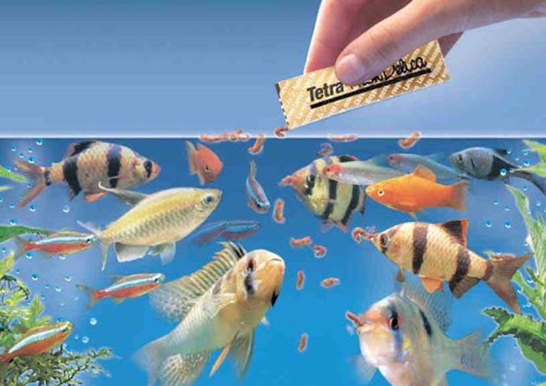 Как правильно кормить аквариумных рыбок