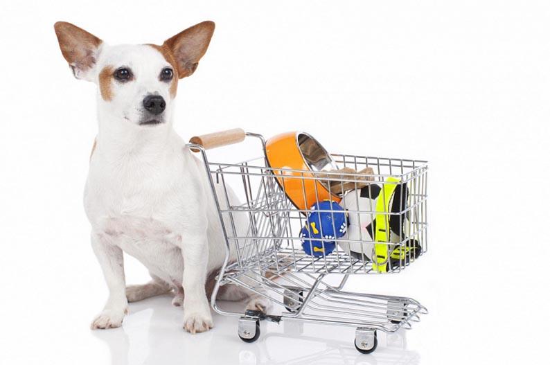 Как выбрать товары для кошек и собак