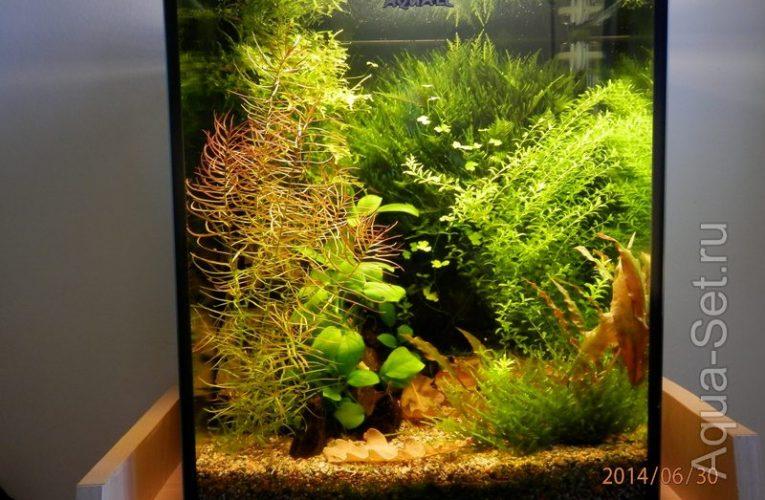 Аквариум-Кубик на 30 литров с растениями.