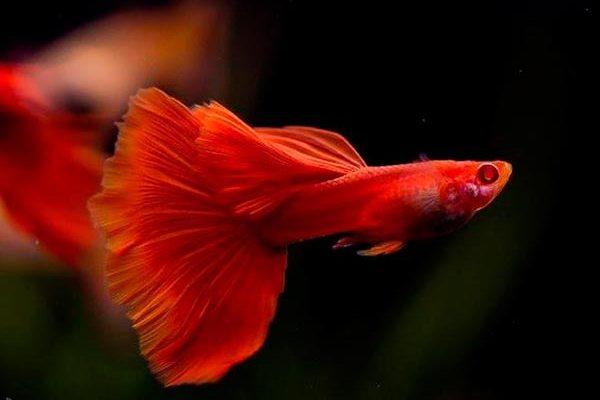 названия и описание, фото миролюбивых рыб