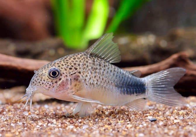 виды рыбок, условия содержания, фото, отзывы