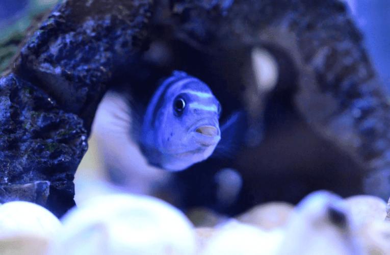 содержание рыбки, уход, кормление, описание видов